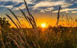 گفتگو با نایب رئیس نظام صنفی کشاورزی رزن
