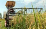 باید آینده بخش کشاورزی را به سمت جوان کردن ببریم / هنرستانهای فنی و حرفه ای کشاورزی فعال می شوند / طرح توانمندسازی کشاورزان آینده طراحی شد