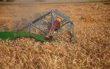 قیمت خرید گندم باید ۶ هزار تومان باشد / قیمت ۴ هزار تومانی گندم ظلم آشکار دولت به کشاورز است