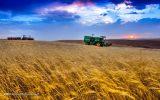 چشم انداز روشنی پیش روی تولید نیست / تنها کشاورزانی که کود دارند، گندم کشت میکنند / قیمت بذر به ۶ هزار تومان رسید!