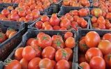 دلایل گرانی گوجه فرنگی و پیاز؟