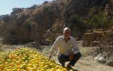 گفتگو با رئیس نظام صنفی کشاورزی جنوب کرمان