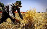 پیشنهاد رییس نظام مهندسی برای رونق بازار کار فارغ التحصیلان کشاورزی
