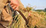 گفتگو با دبیر نظام صنفی کشاورزی بهارستان