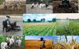 یک خبر برای کارگزاران بیمه کشاورزی