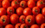 دلایل گرانی گوجهفرنگی؟