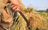 گفتگو با دبیر نظام صنفی کشاورزی جوانرود