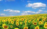 معیارهای قیمت تضمینی محصولات کشاورزی مشخص شد / تشکیل شورای قیمت گذاری + اسامی