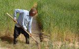 زمین کشاورزی را به عنوان وثیقه بپذیرید / کشاورزان نمی توانند سند شهری برای ضمانت تهیه کنند! / کشاورزان اگر حمایت شوند به سمت کشت گلخانه ای می روند