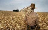 یک کشاورز: کشاورزی مقرون به صرفه نیست / با وعدههای پوچ امیدوارمان می کنند! / کسی به داد کشاورزان نمی رسد / هیچ نظارتی بر بازار کود نیست / کود سفید در بازار سیاه ۳۰۰ هزار تومان شد