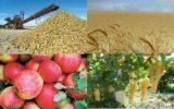 قیمت خرید محصولات باغی و زراعی تعیین شد + جدول