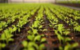 بانک پاسارگاد به فعالان بخش کشاورزی تسهیلات می دهد + جزییات
