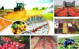 جمعی از کشاورزان استان تهران / دولت باید همه محصولات را تضمینی بخرد