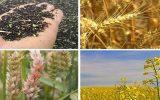 تعیین نرخ خرید تضمینی محصولات کشاورزی توسط شورای ۱۰ نفره