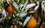 هشدار مهم سازمان هواشناسی به کشاورزان