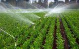 هشدار کاهش دما و توصیه به کشاورزان