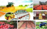 روستا بازار راه اندازی می شود / استقبال زیادی از روستا بازار شد / تولیدکنندگان تمایل دارند محصول را بدون واسطه بفروشند