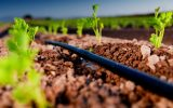 هدف ما توسعه کشاورزی صنعتی است / خرد بودن اراضی از چالشهای اصلی بخش کشاورزی است / تجمیع اراضی کوچک باید انجام شود