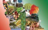 ۲۵۰ روستا بازار راهاندازی می شود