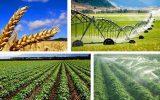 جزئیات طرح پشتیبانی و رفع موانع تولید کشاورزی اعلام شد
