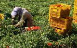 گفتگو با رئیس نظام صنفی کشاورزی کوثر