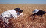 طرح ناظران بخش کشاورزی تصویب شد / وضعیت ناظران کشاورزی را پیگیری می کنیم / تعیین تکلیف استخدامی ناظران کشاورزی حق قانونی آنهاست