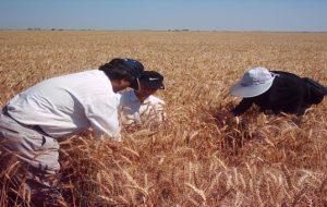 دانشجویان رشته کشاورزی، دوره آموزش عملی در مزارع می بینند