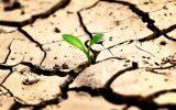 امهال و تسهیلات مقابله با خشکسالی برای کشاورزان / جرایم خسارت دیدگان بخشوده می شود + جزئیات