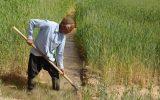 گفتگو با دبیر نظام صنفی کشاورزی جغتای