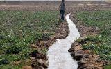 گلایه یک کشاورز آزادشهری / کشاورزان خرد باید حمایت شوند