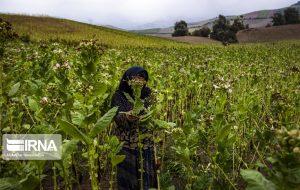 تسهیلات با حداقل سود به کشاورزان و دامداران پرداخت میشود