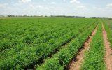 همه اراضی کشاورزی تا پایان دولت سیزدهم سند دار می شود