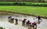 کشاورزی در ایران به صرفه نیست / کشاورزی باید برای کشاورز سودآور شود / باید هزینههای تمام شده کشاورز را کم کنیم / کشاورزان به کشت تلفیقی بپردازند