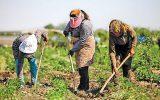 اجرای طرح ملی بیمه اجتماعی خانوارهای محروم و کمتر برخوردار روستایی و عشایر
