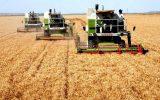 حرف شما / جمعی از کشاورزان کرمانشاهی: در انتظار تعدیل قیمت گندم و جلوگیری از افزایش قیمت نهاده ها هستیم / انتقاد از افزایش قیمت بذر اصلاح شده گندم